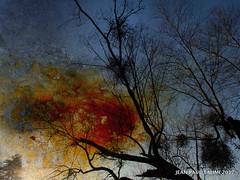 Feu de bois (JEAN PAUL TALIMI) Tags: bourgogne talimi texture architecture arbre zen rouille nature yonne appoigny lumieres automne colonnade ciels bleue nuages