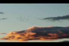 MVI_3961 (LezFoto) Tags: murmuration starlings rspblochofkinnordy angus scotland unitedkingdom canoneos700d sigma 700d canon 120400mmf4556dgapooshsm