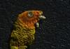 pappagallo (sharkoman) Tags: pappagallo piume penne becco occhio pareidolia