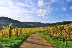 Dans les vignes à Mittelbergheim (mamietherese1) Tags: world100f earthmarvels50earthfaves phvalue