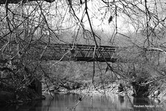 Bridging The Gap (rcss2800) Tags: blackandwhite b w branches trees branch water bridge gothic forest park tree wood river landscape monochrome