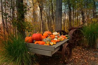 Happy Halloween EXPLORED