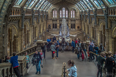 There's Hope (Hamburg PORTography) Tags: blue whale hope blauwal natural history museum london uk england gb hintze hall 2017 hoonose68 sgrossien grossien rmc tokina 24mm 128 minolta md mount quenox focal reducer sr fuji xmount fujifilm xe1 adapted adapter lens objektiv focalreducer manual againstautotagging