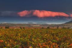 Mirando para otro lado (Alfredo.Ruiz) Tags: canon eos6d ef24105 amanecer najera rioja viña otoño nube montaña