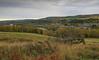 Aberlour autumn (judmac1) Tags: autumn spey speyside village aberlour trees river valley scotland
