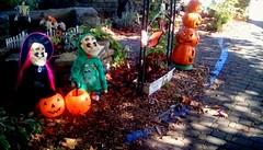 Trick or treat!  Happy Halloween! 365/1 (Maenette1) Tags: spiespubliclibrary garden trickortreet halloween jackolanterns menominee uppermichigan flicker365 michiganfavorites 52weeksofphotographyweek47