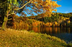 Farbenrausch (berndtolksdorf1) Tags: jahreszeiten deutschland thüringen herbst bunt farben colors wald wasser bäume lichtstimmung outdoor