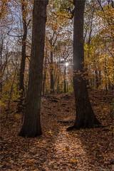 Photo d'automne - les piliers (StefDenis) Tags: automne grandparcsetespacepublique hdriassembler parcdumontroyal paysage photostypedetraitement montréal québec canada ca