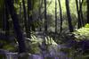 Arbres et chemin (david49100) Tags: 2017 fougère maineetloire seichessurleloir arbres d5100 nikon nikond5100 plant plante septembre trees