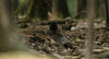 Sleeping time! (Axel Bobard) Tags: animal animals animaux photographie animalière mammifère mammal mammals sanglier boar nature natural forest forêt sauvage espace rambouillet yvelines sleep canon canoneos7dmarkii tamron tamron150600 mamiferos mamifero mammifero