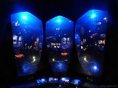 The Division Bell room reflected (ExeDave) Tags: p1090503 pinkfloyd divisionbell room theirmortalremains exhibition va victoriaalbert museum brompton london kensingtonandchelsea