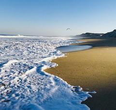 (EleveNateXI) Tags: beach dunes ocean waves pacificocean hightide seafull flight sunlight water sea california sand sky nature earth explore adventure awesome cool best great greatest wonderful ca westcoast westcoastbestcoast morning sunshine