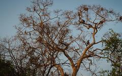 25.06-Yala-National-Park-Sri-Lanka-canon-1500px-006