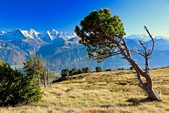 Niederhorn (sylviafurrer) Tags: berge mountain switzerland alpen alps herbst autumn niederhorn