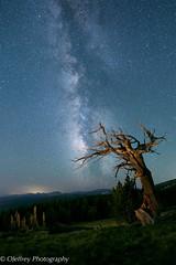 Colorado Night Skies (OJeffrey Photography) Tags: co milkyway nightsky nightscape starscape windyridge colorado rockymountains lll bristleconepines stars ojeffreyphotography ojeffrey jeffowens nikon d800