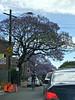 2017 Sydney: Newtown #2 (dominotic) Tags: 2017 traffic street sign carillonavenewtown cars bluesky innersydney newtown jacarandatree purple bikerider iphone8 sydney australia