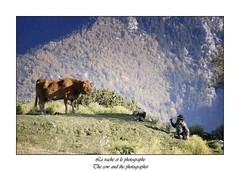 La vache et le photographe (j meresse05) Tags: vache cow photographe photographer