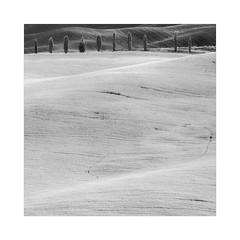 Cypress Meditation II (W.Utsch) Tags: infrared bnw tuscany minimalism tree landscape blackwhite schwarzweis lines curves