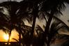 Morning light behind palm trees (wuestenigel) Tags: morning palm beach sunrise silhouette tropical trees palme strand noperson keineperson sun sonne tropisch tree baum island insel coconut kokosnuss seashore exotic exotisch ocean ozean travel reise resort sunset sonnenuntergang water wasser sand vacation ferien idyllic idyllisch relaxation entspannung seascape seelandschaft
