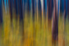 Rise (an.thoniee) Tags: alberi autumn autunno light luce paesaggio trees color colore foresta forest wood panning mosso astratto abstract