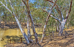 the alice #3 (Fat Burns ☮) Tags: landscape river gumtrees aliceriver barcaldine queensland australia bush bushscene outback outbackriver eucalypts eucalypttrees trees deadtrees dryriverbed riverbed redrivergums nikond610 sigma150600mmf563dgoshsmsports lagooncreekbarcaldine qld