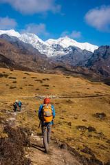 Gocha-la trek in Sikkim, India (David Ducoin) Tags: asia dzongri gochala hike hiking himalaya india kangchenjunga landscap landscape mountain nationalpark nature sikkim snow snowcap trek treking trekking walking gangtok in