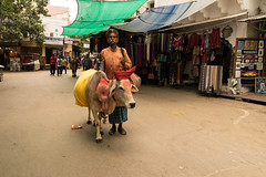 Pose (stevenp74) Tags: sony 28mmf2 pushkar cow man market india rajasthan colourful a7 street pose