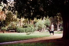 City park (35mm film) (Zuiko Om) Tags: ngc tree green dog street sicily palermo analog pellicola kodakcolor film park