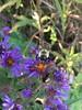 171007-FS-Midewin-CB-008 (usfs_Eastern_Region) Tags: midewinnationaltallgrassprairie turtlepond