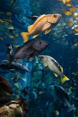Canon Wizards (Bert CR) Tags: aquarium fish ripleysaquarium toronto canoncamera colorful canonwizards autoiso bucketlist lowlight underwater