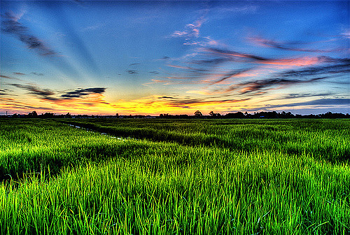 The Worldu0027s Best Photos of sawah and wallpaper - Flickr Hive Mind