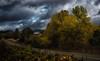 not what I'd expected... (Alvin Harp) Tags: eugene oregon i5 october 2017 sonyilce9 fe2470mmf28gm autumncolors abandonedhouse countryroad cloudsstormssunsetssunrises alvinharp