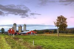 451061259 (sunygcc) Tags: agriculture autumn barn cornell cow dusk farm grass newyorkstate sunset vegetarianfood redbarn upstateny
