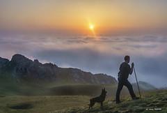 Ansias de libertad (Jabi Artaraz) Tags: jabiartaraz jartaraz zb euskoflick rebaño pastor pero amanecer despertar bruma niebla sol light nature