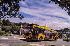 Seatoun - Dundas Street (andrewsurgenor) Tags: transit transport publictransport nzbus gowellington electric trackless trolleybus trolleybuses wellington nz streetscenes bus buses omnibus yellow obus busse citytransport city urban newzealand