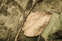 Leaf and twig on stone (Pierre Jaquez - JPJ Photography) Tags: childspark delawarewatergap fall outdoor pennsylvania unitedstates closeup flickr leaf nature print stone