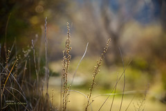 Next to the river (Oddiseis) Tags: montorodemezquita maestrazgo teruel aragón spain river guadalope plants flora rural valley mountains light colors deepoffocus water vegetable tamron247028