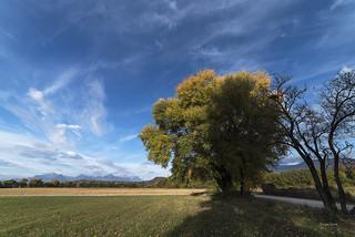 C'est l'automne pour mes arbres préférés