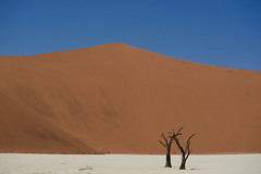 Big Daddy (setoboonhong) Tags: travel big daddy deadvlei salt pan dead trees bare sand dune red white blue brown climbers outdoor nature namibia