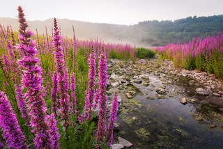 flower oasis