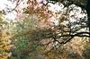 (irina birdie) Tags: analog analogue analogphotography analoguephotography autumn filmphoto filmphotography film flora filmgrain forest nature naturelovers natureonfilm naturephotography natural filmisnotdead autumncolors fall 35mm 35mmfilm kodak canon canonfilm landscape
