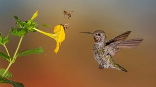 BEEing Careful