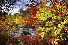 Le long de la rivière (gaudreaultnormand) Tags: automne canada couleur foret jaune orage quebec rivière rouge saguenay vert arbre eau ciel