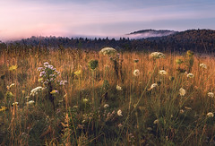 September (Appalachian Hiker) Tags: autumn meadow mountains sunrise fall wildflowers valley