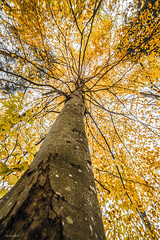 autumn colors (sami kuosmanen) Tags: taivas tree travel suomi sky syksy autumn valo värikäs colorful creative photography puu metsä finland forest nature luonto light yellow keltainen