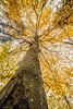 autumn colors (sami kuosmanen) Tags: taivas tree travel suomi sky syksy autumn valo värikäs colorful creative photography puu metsä finland forest nature luonto light yellow keltainen