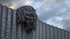 Mop Head (Theen ...) Tags: adelaide blue clouds corrugated dry evening fabric fence hang head iron lumix metal mop muppet sky texture theen
