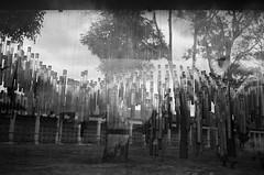 Test tube memories, Bogotá (RoryO'Bryen) Tags: testtubememory centrodememoriapazyreconciliación roryobryen copyrightroryobryen colombia rangefinder black film iso125 35mmsummiluxmasph