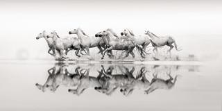 Horses Reflected