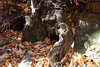 171008 - 30 - Nomaglio - Museo Castagna (mastino70) Tags: nikon d80 ag 2017 italia italy piemonte piedmont nomaglio ecomuseo castagna chestnut museum